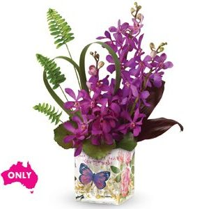 tropical orchids in a glass cube