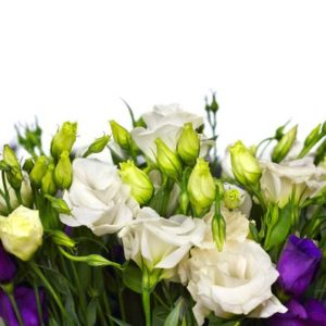 lisianthus come in a variety of colours purple white and pink delicate flowers