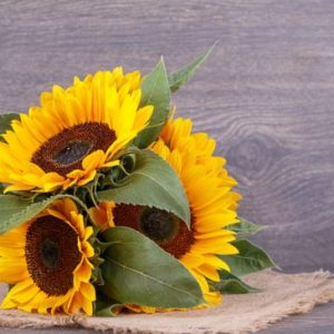 Easy flowers sunflowers