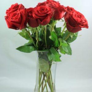 6 Long Stem Premium Roses