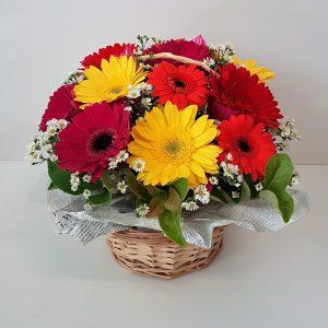 bright colured Gerbera Basket deliverd gift