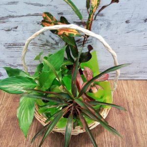 living plant gift basket
